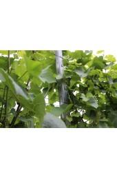 Vinohradnícky stĺpik HRON